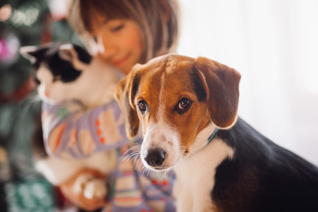 Beneficios de tener una mascota en casa con tus hijos.